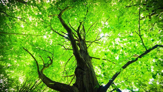 Going Green.jpg