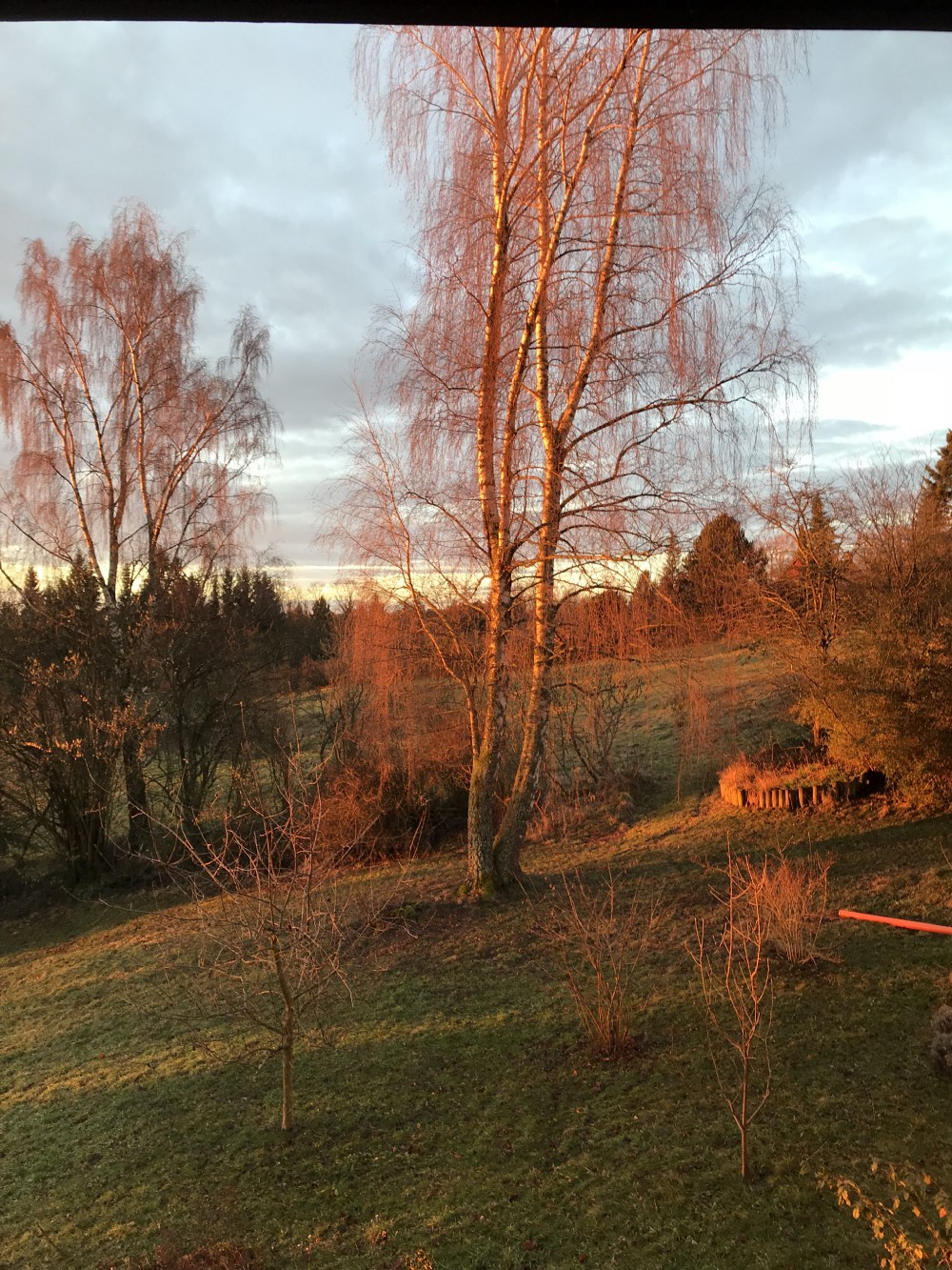 First morning light in the Black Forest, GE