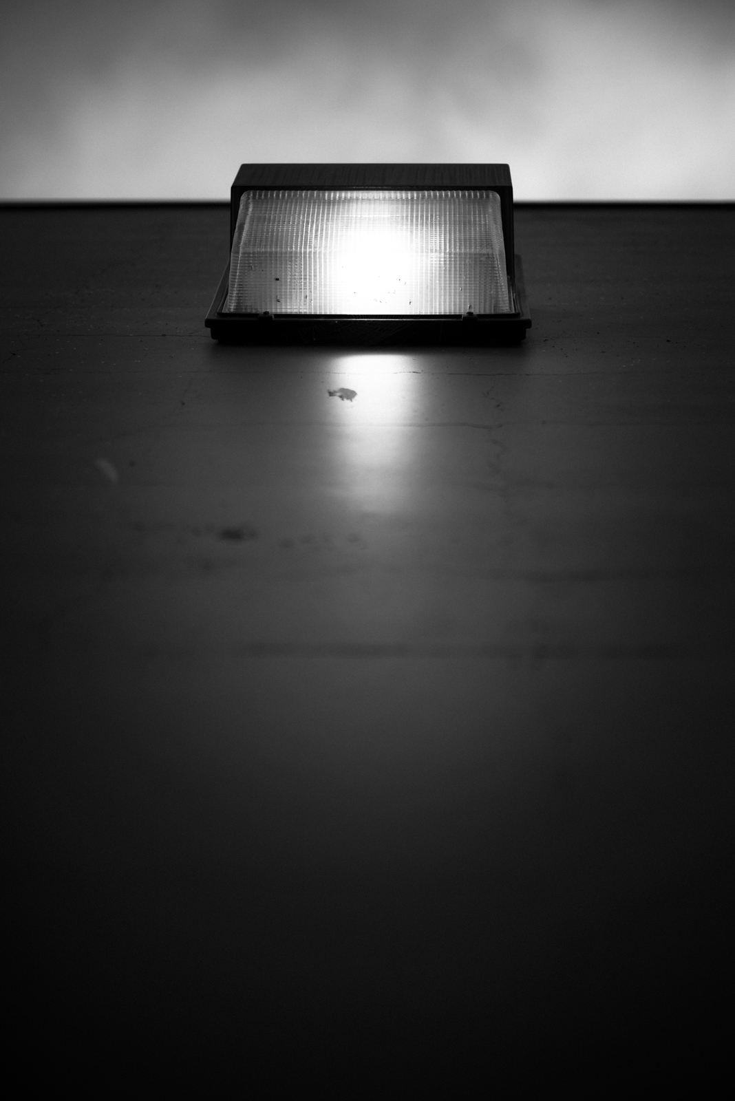 Jeffrey Dowell Photography — JDP_1376.jpg