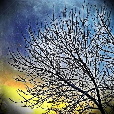 A Hanging Moon.jpg