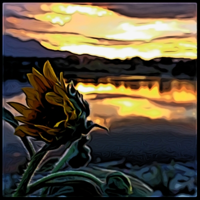 The Unobservant Sunflower.jpg
