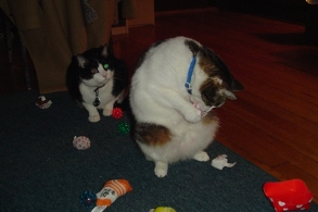 Jake watching Hedwig destroy catnip toys, circa 2004.