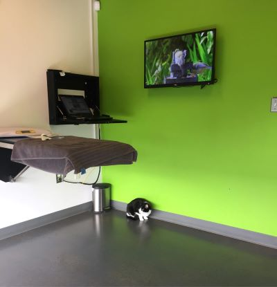 Jake checking out the exam room. He did jump up on the table voluntarily at one point to watch the bird videos.