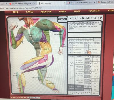 Playing Poke-a-Muscle is one of the more fun ways to study.