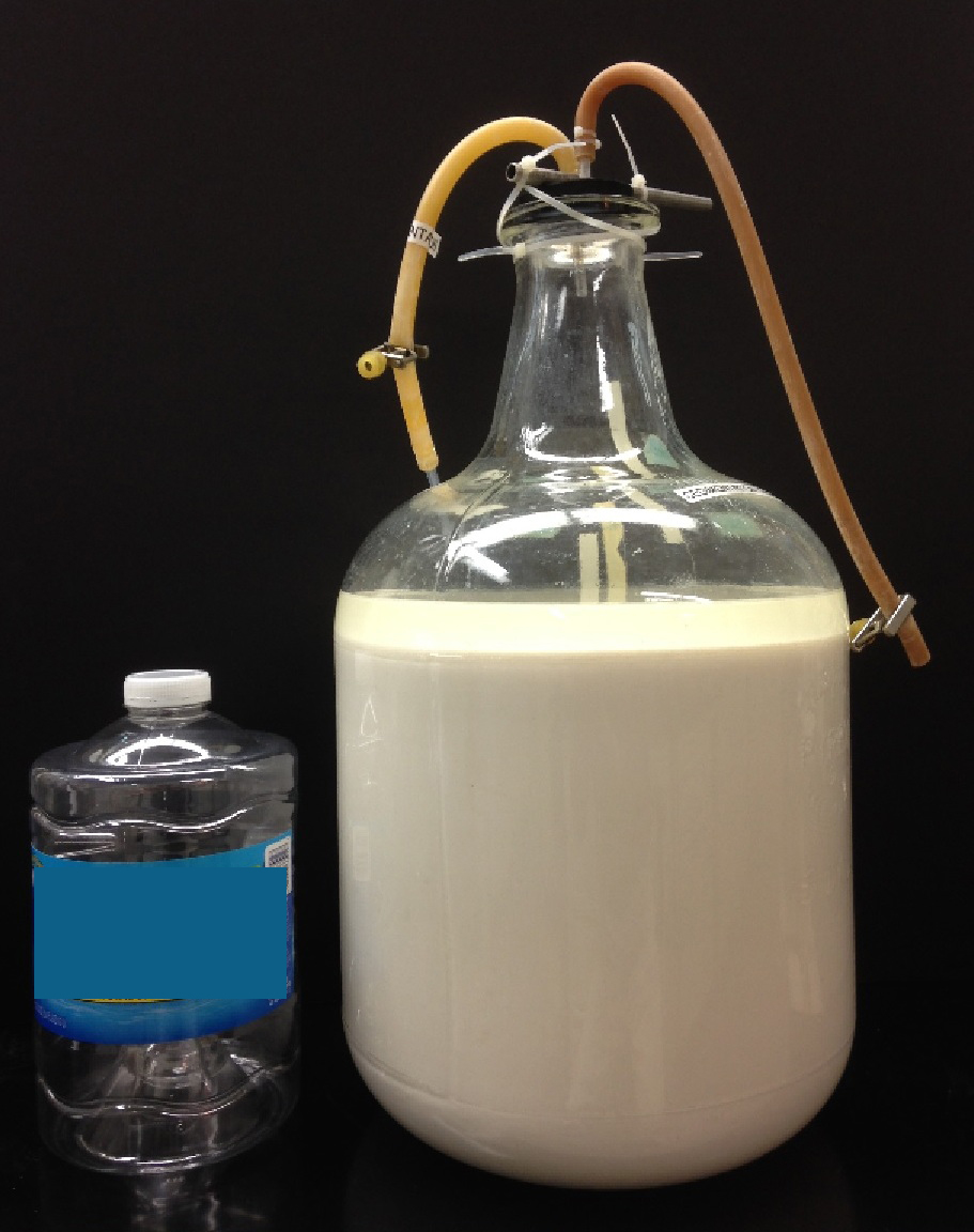 20L of fermentation mixture ready for nanoparticle separation. Photo courtesy of Oak Ridge National Laboratory.