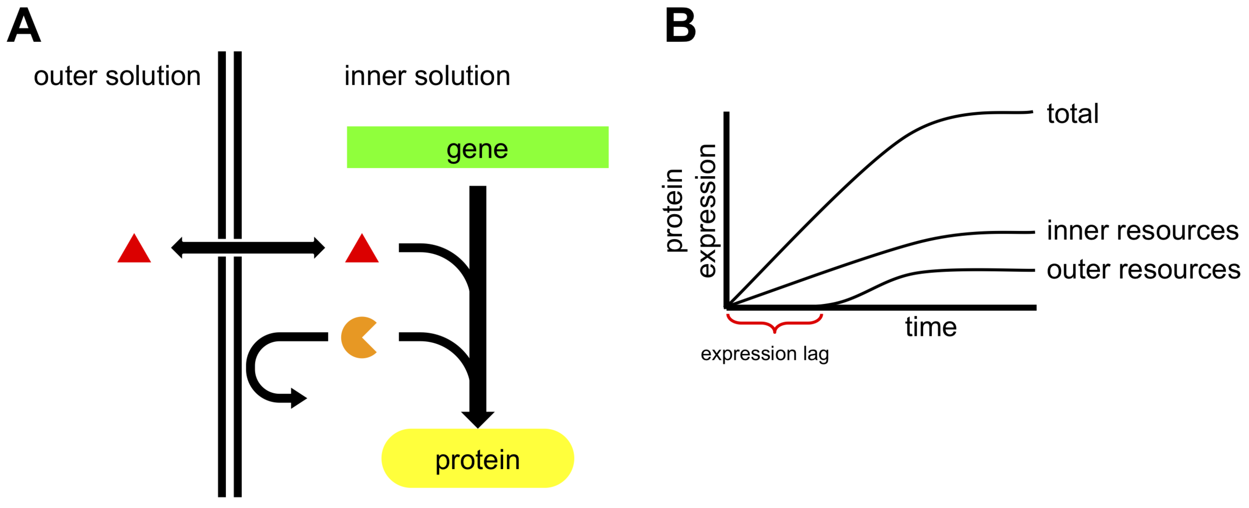 Figure: Resource location (internal or external) affects gene expression behavior.  (A) Gene expression is affected by the encapsulated (orange circular sector) and external (red triangle) molecular resources. (B) The gene expression transient is the sum of two components: one controlled by the internal resource concentration and one controlled by external resource concentration. The expression transient due to external resources should experience a delay (labeled here as expression lag) related to the membrane transport properties.