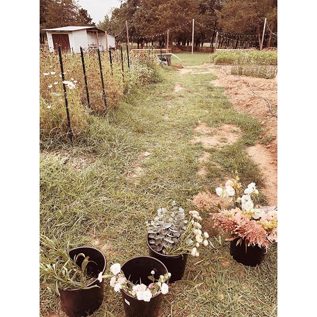 Bama red dirt flowers are just sweeter. I lived my flower farm dream this morning and can't wait to show you what I do with the flowers for a special couples wedding dinner.