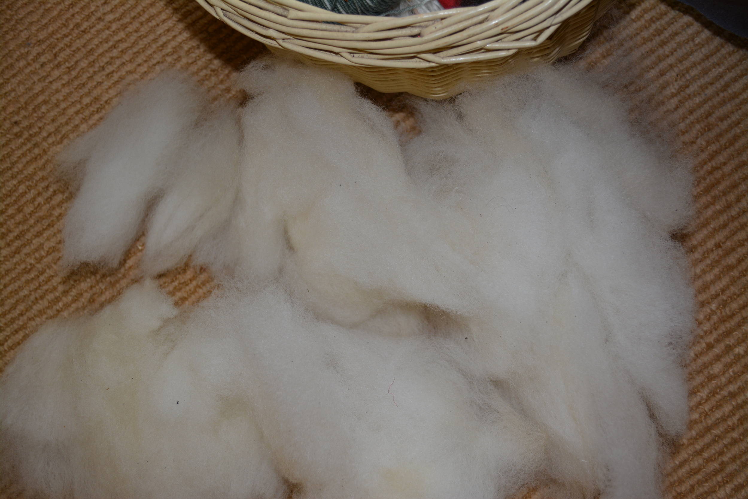 Cheviot fleece, washed and hand flicked.
