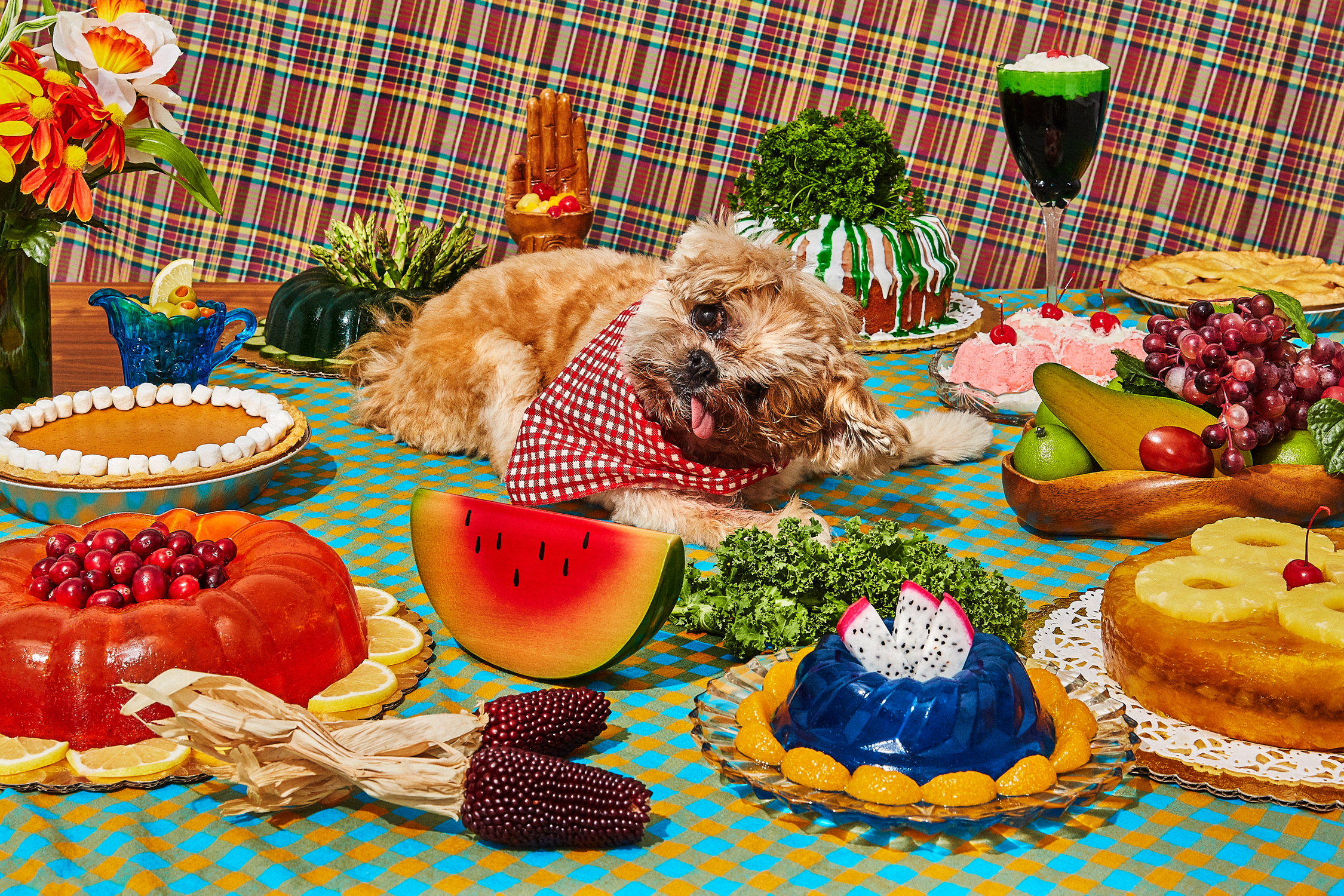 Amy Taylor Styling Still Life: Marnie The Dog