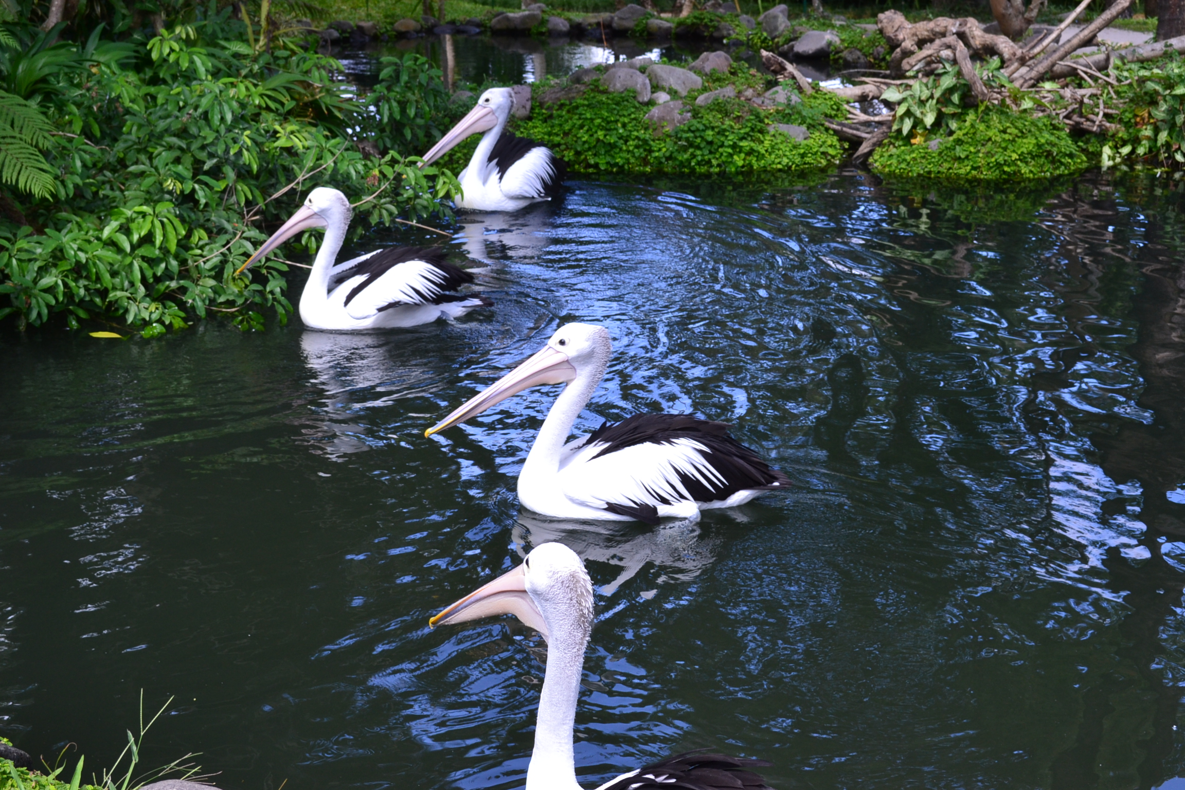 Beautiful varieties of birds in tranquil and peaceful setting makes for a great day out.