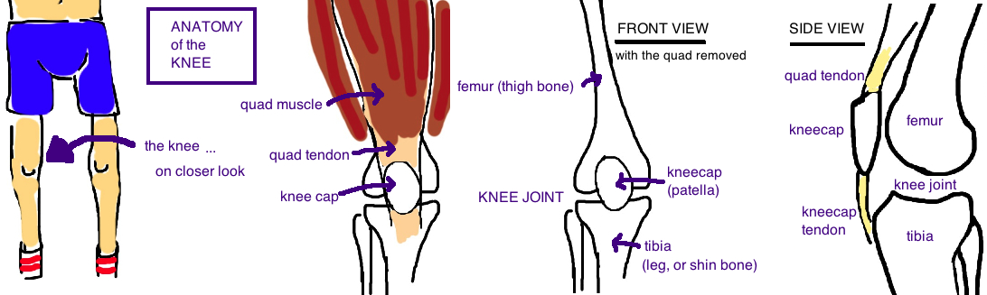 patella knee 1.jpg