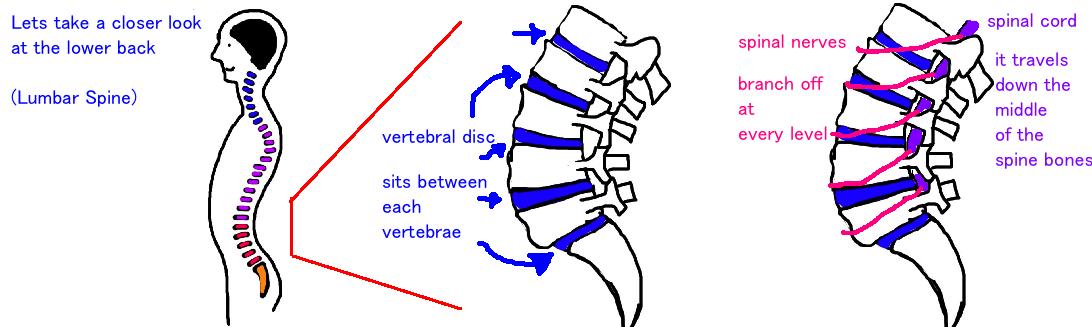 low back pain lumbar spine