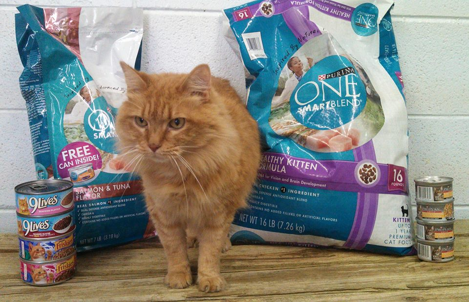 Want to support a local organization? Help the cats at Lakeland Animal Shelter! They are low on canned and dry foods. Click Tipsy's photo for the Amazon.com Wish List or stop in the shelter with your donation. Your support is greatly appreciated!