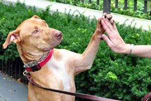 Photo courtesy of  aspca.com .