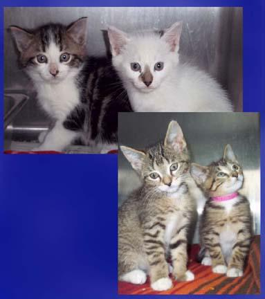 It's that time again and here at HAWS it is raining kittens.  Join us Saturday, June 28th from 11am-3pm for our  3rd Annual Kitten Shower !  There will be cake, kittens and more!  The first 30 felines that go home that weekend will receive a special starter kit valued at over $50.  Check out  www.hawspets.org  for more info!