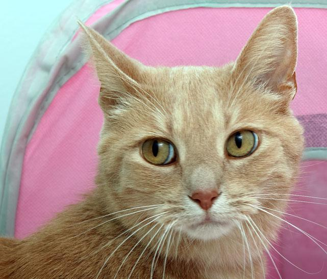 Echo is a more mature 7 year old boy how knows how to get what he wants. He is very sweet and loves to snuggle. Stop by HAWS today to meet both of these great adoption candidates.