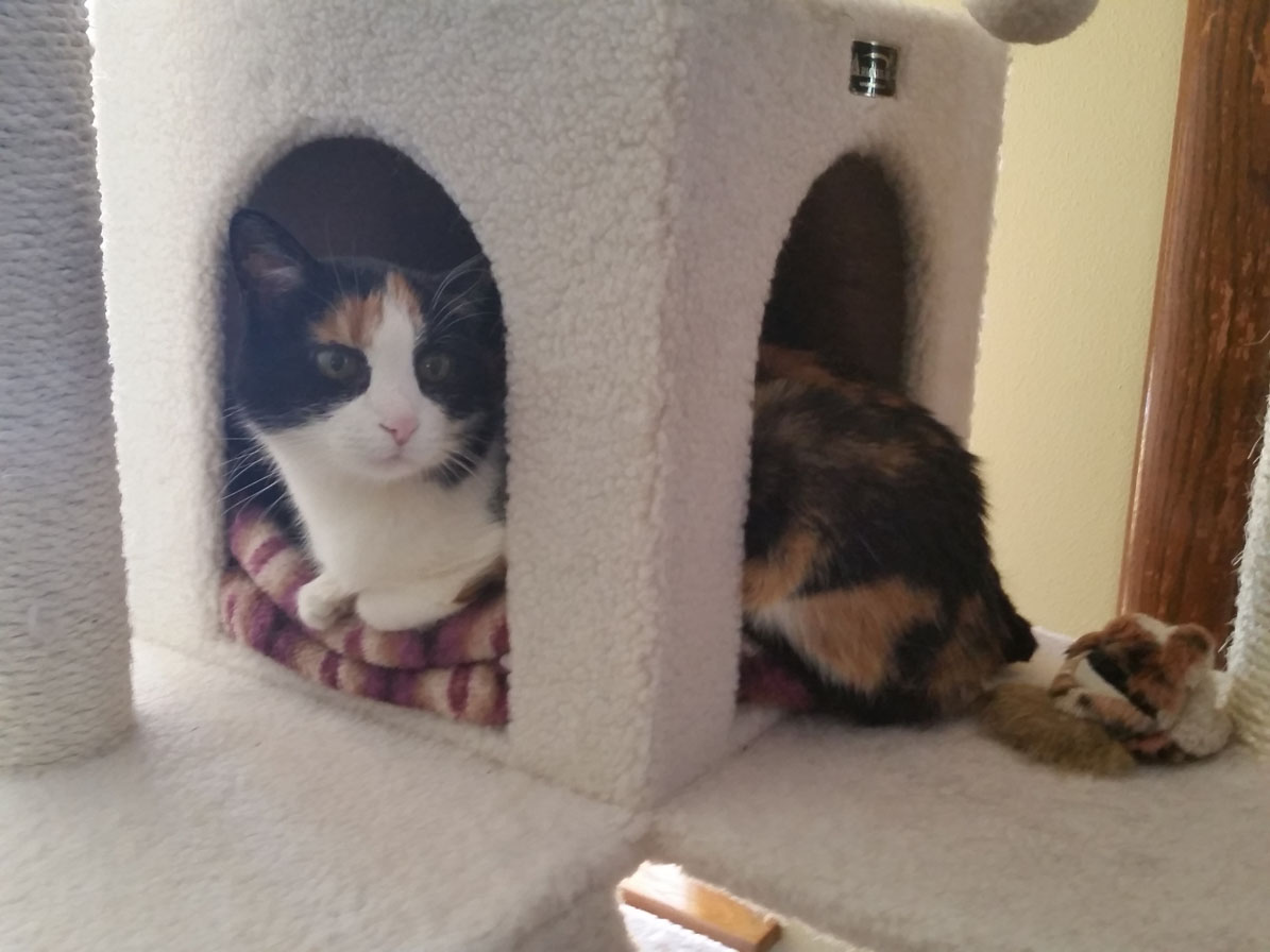17-year-old Cali still loves her cat tree :)