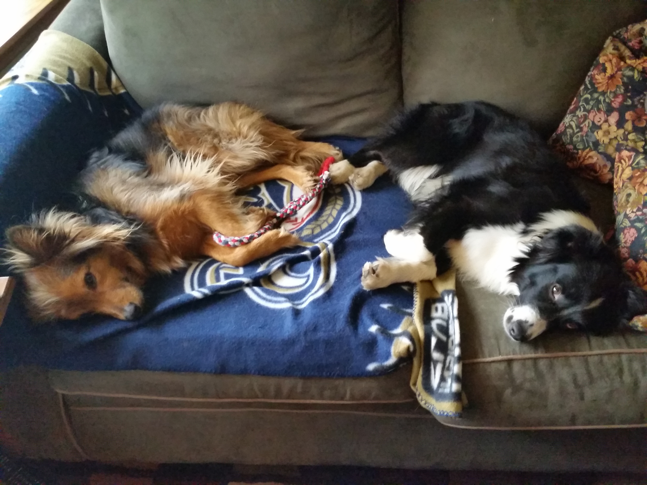 Tripp & Pepper snoozing after a hard play session!