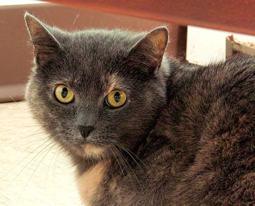 Peapod came to HAWS as a stray. We believe she is about 5 years old. She is a sweet girl who is looking to find her forever home. She would make a great addition to any family!