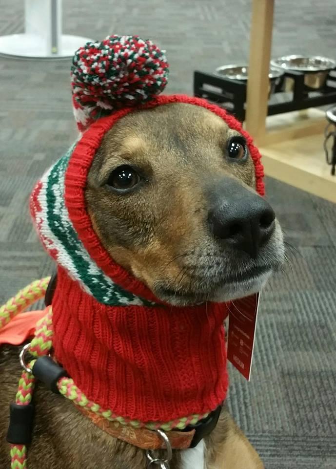 Need we say more? Keep those doggie ears warm! ;)