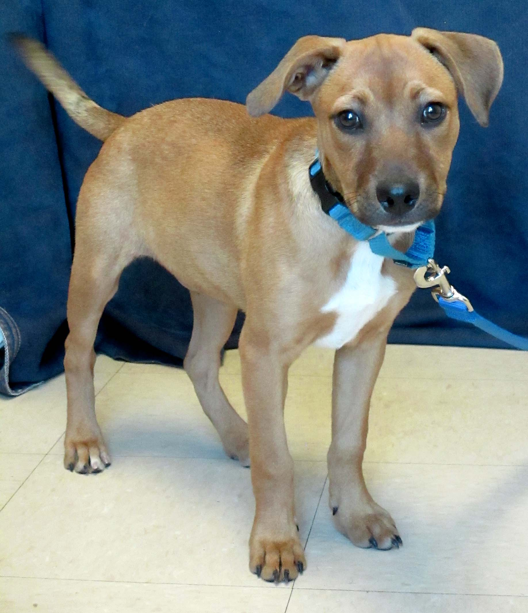 Gretel is a 6-month-old puppy that is full of energy and spunk!She does well with people and other dogs. She is already learning to fetch with soft toys.