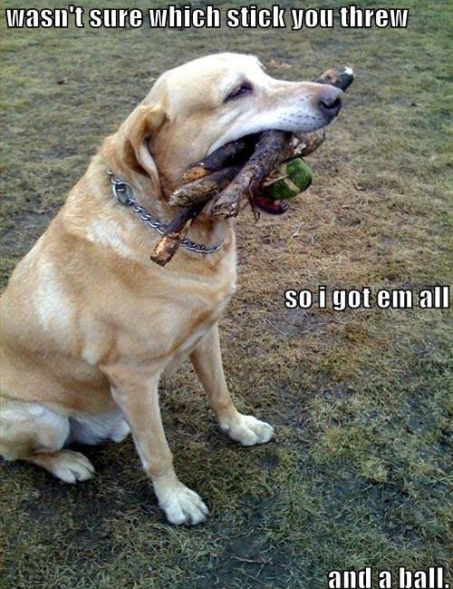 loldog_dog-playing-fetch.jpg