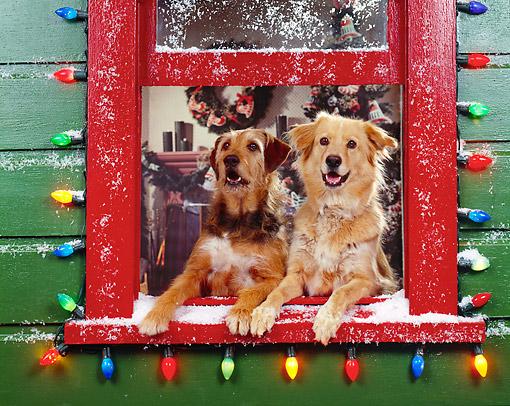 Christmasdogswindow.JPG