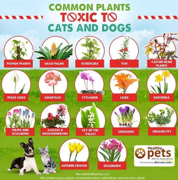 toxicplants.jpg