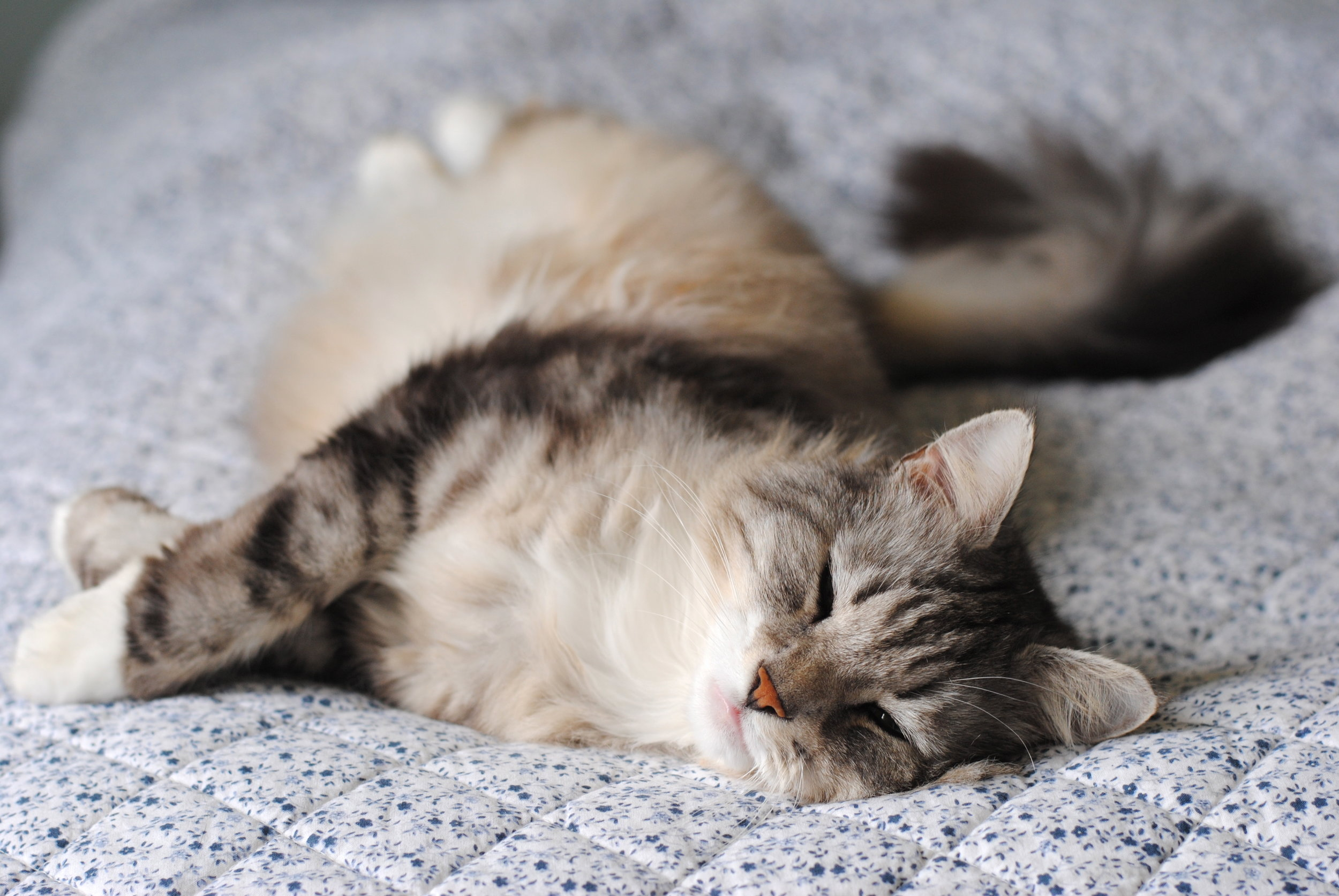 relaxedcat.jpg