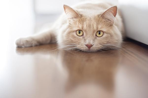 Sad-depressed-orange-cat-lying-on-the-floor.jpg