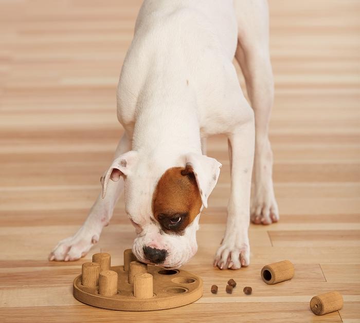 Dog Smart - Composite