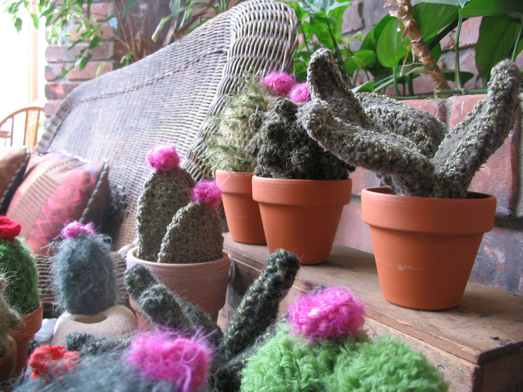 cacti_group1.jpg