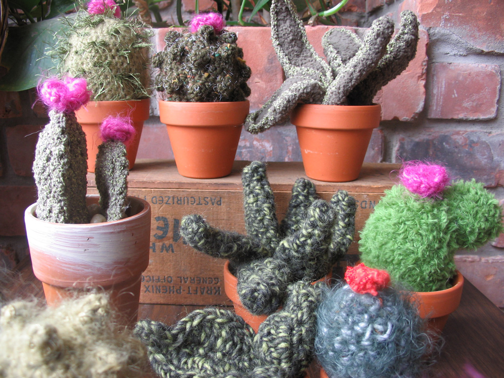 cacti_group3.jpg