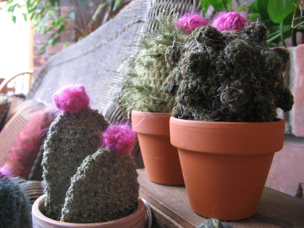 cacti_group4.jpg
