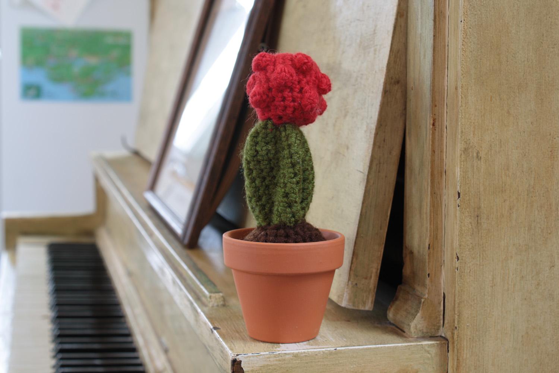 cacti006.jpg
