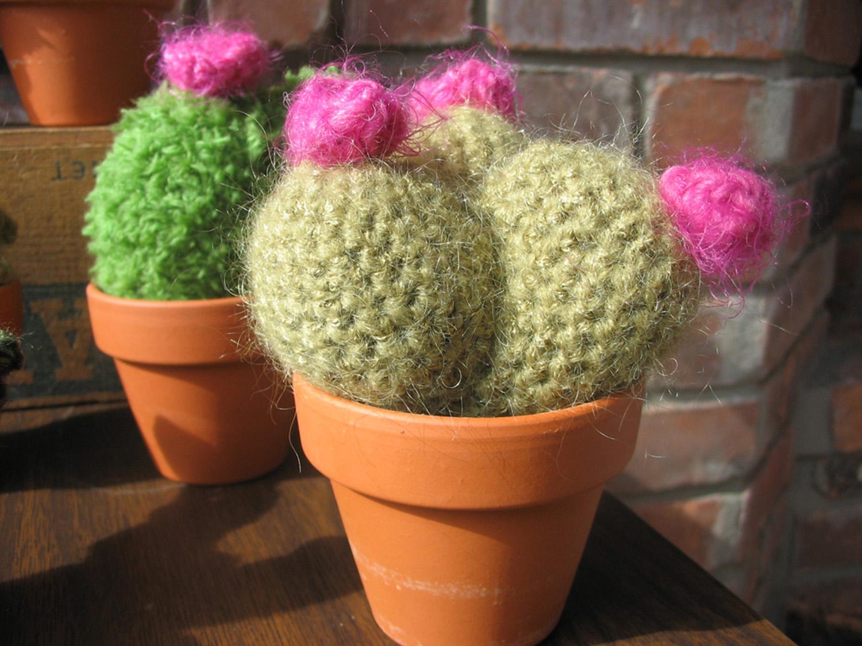 cactus_trio.jpg
