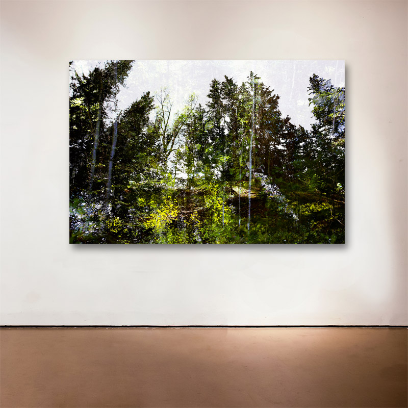 """Forest Walk 1 , 2013 Medium: Archival UltraChrome Inkjet Print  Dimensions and Edition Size:  20 x 30"""", Edition of 30 