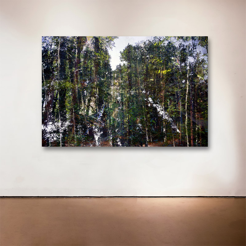 """Forest Walk 3 , 2013 Medium: Archival UltraChrome Inkjet Print  Dimensions and Edition Size:  20 x 30"""", Edition of 30 
