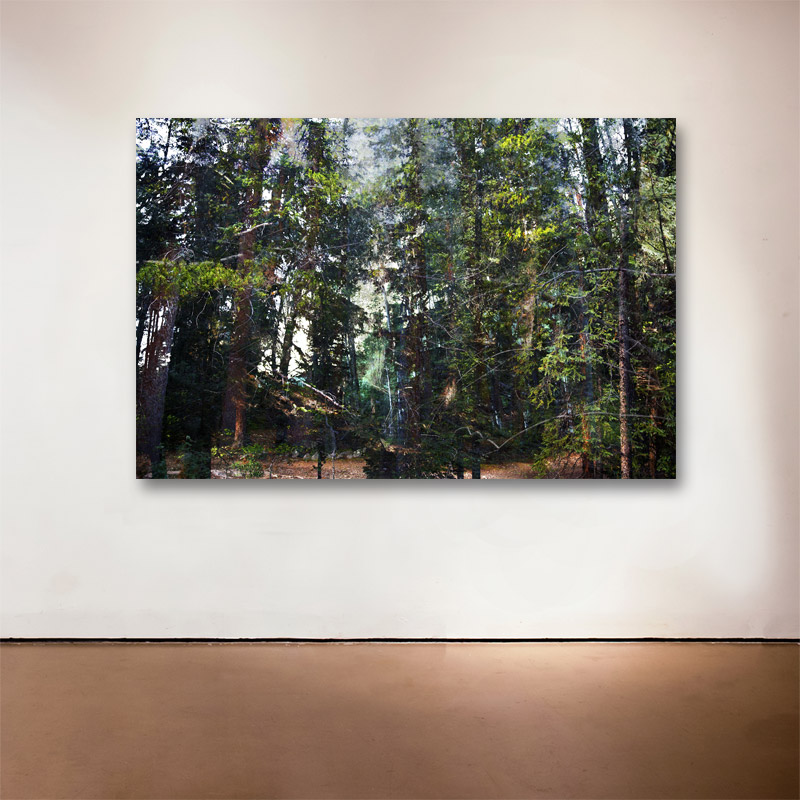"""Forest Walk 4 , 2013 Medium: Archival UltraChrome Inkjet Print  Dimensions and Edition Size:  20 x 30"""", Edition of 30 