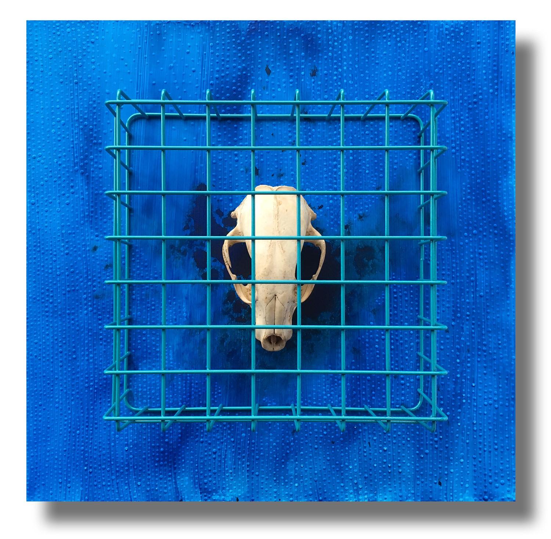 Blue #8 - Endangered, Caged and Extinct Blue Mood