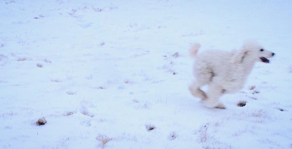 Clover Snow.jpg