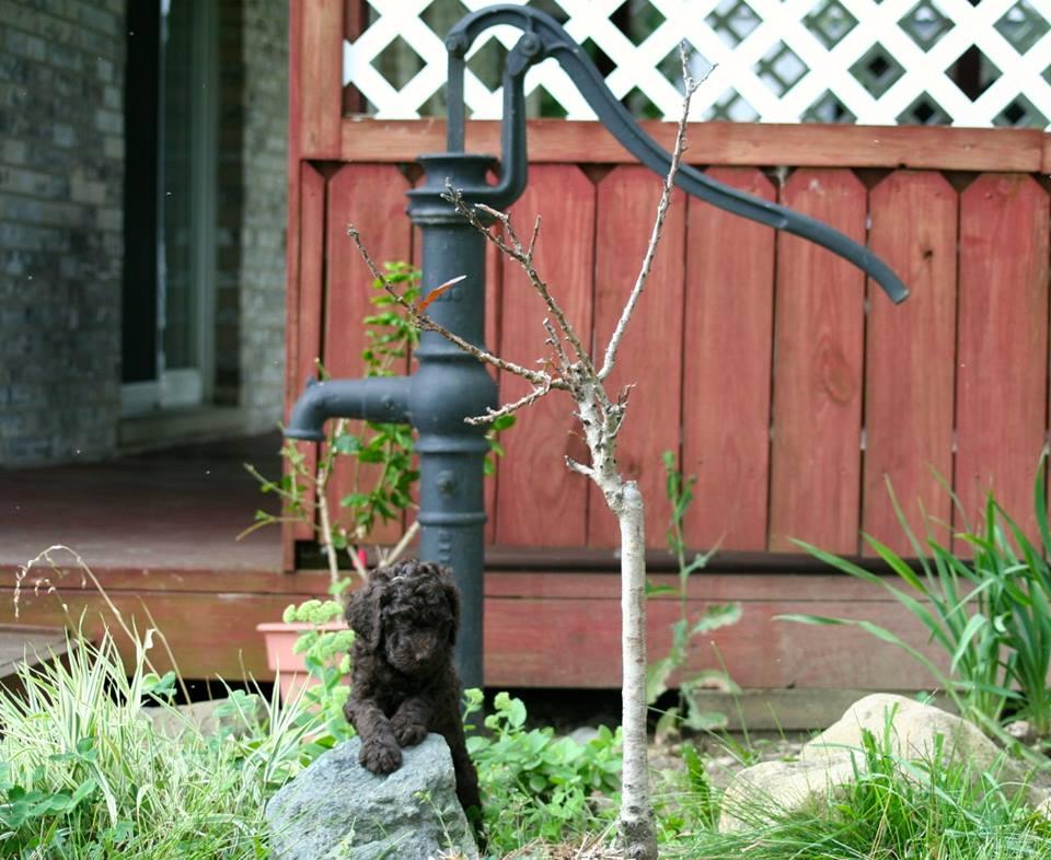 garden status.jpg
