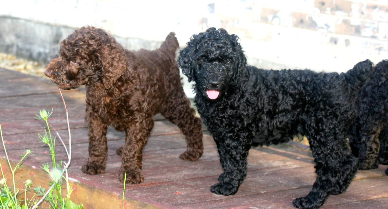 brown & Black bb.jpg