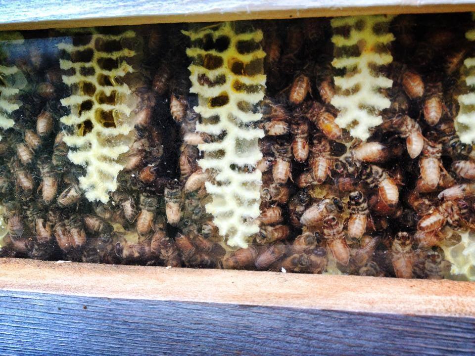 making honey.jpg