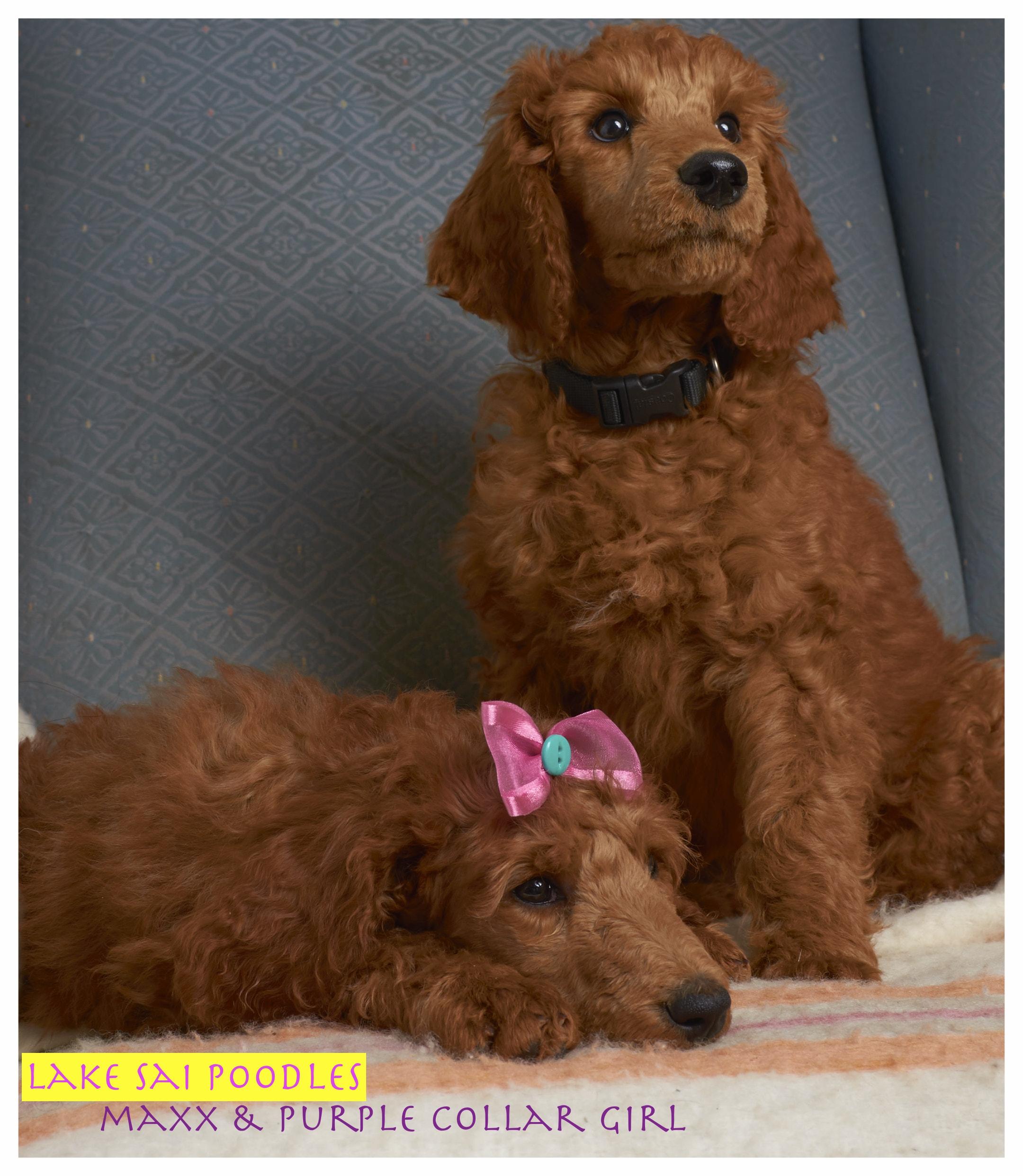 Indoor_Dogs_7_4.jpg