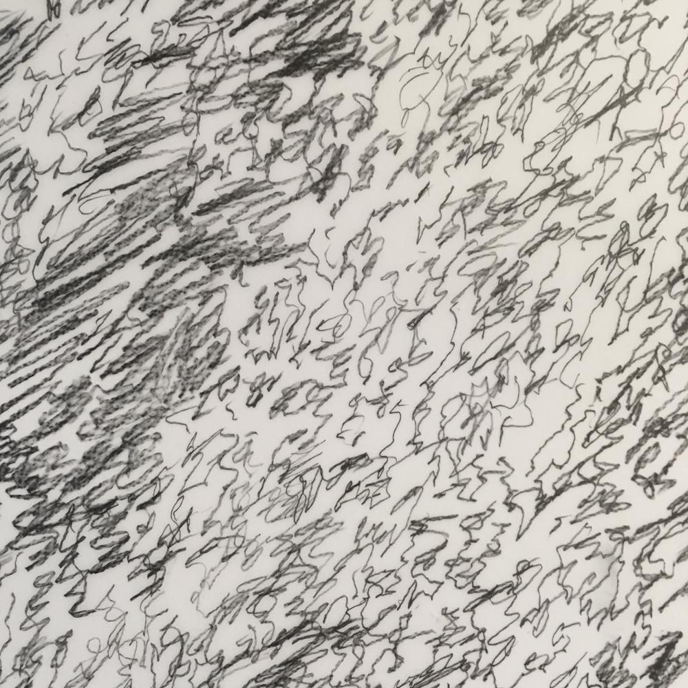 "Silver leaf (study 1),  detail, 2019  Mylar, graphite  18"" x 24"""
