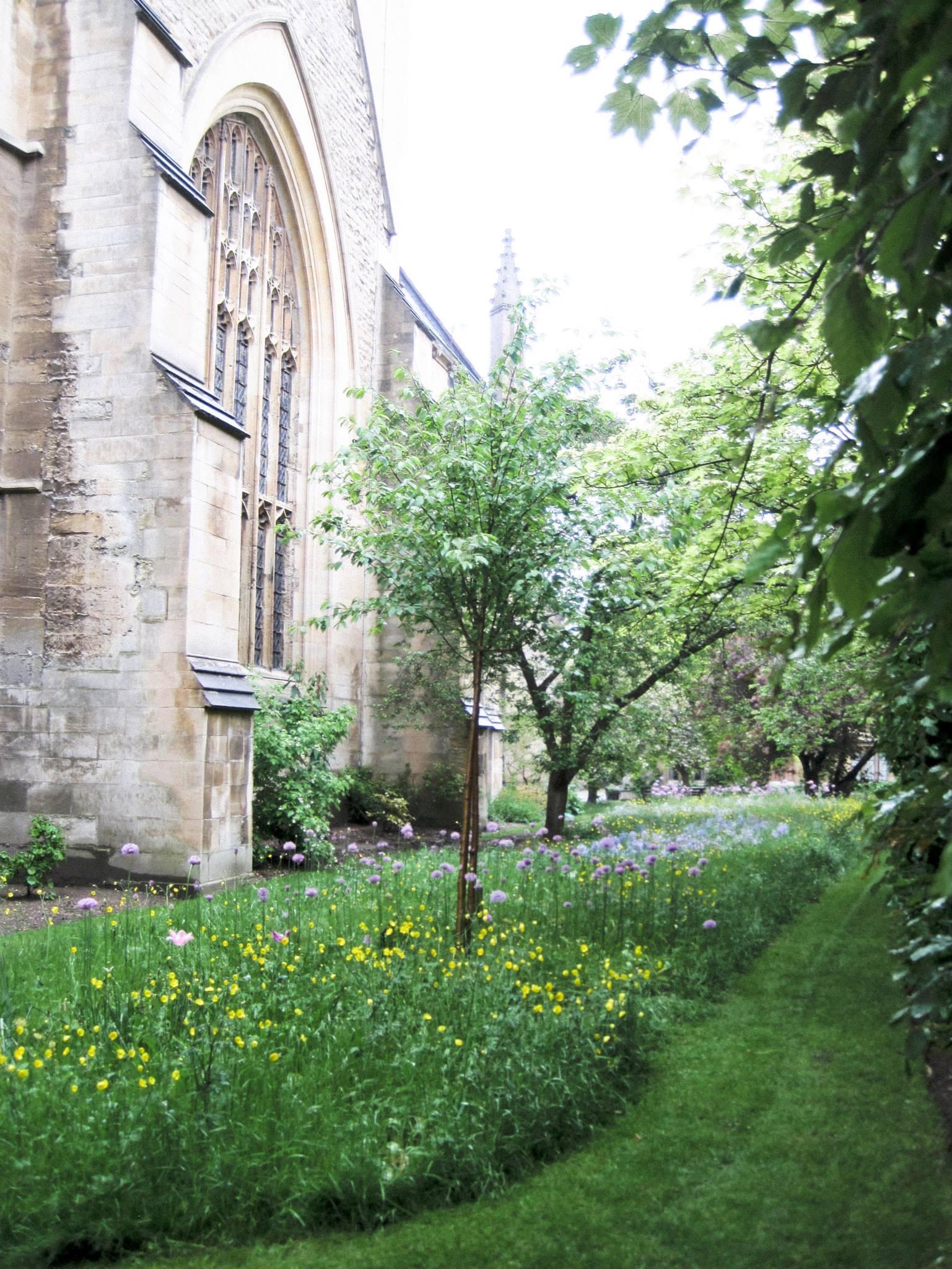 Wildflower garden in Oxford.
