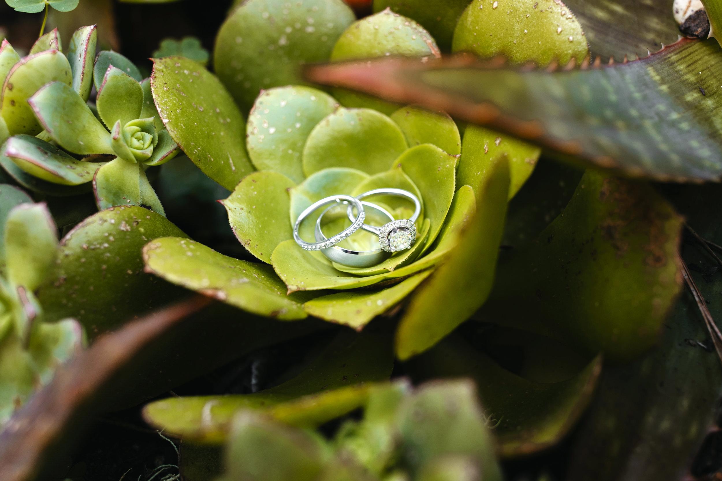 big-sur-elopement-california-adventure-wedding-photographer 069.JPG