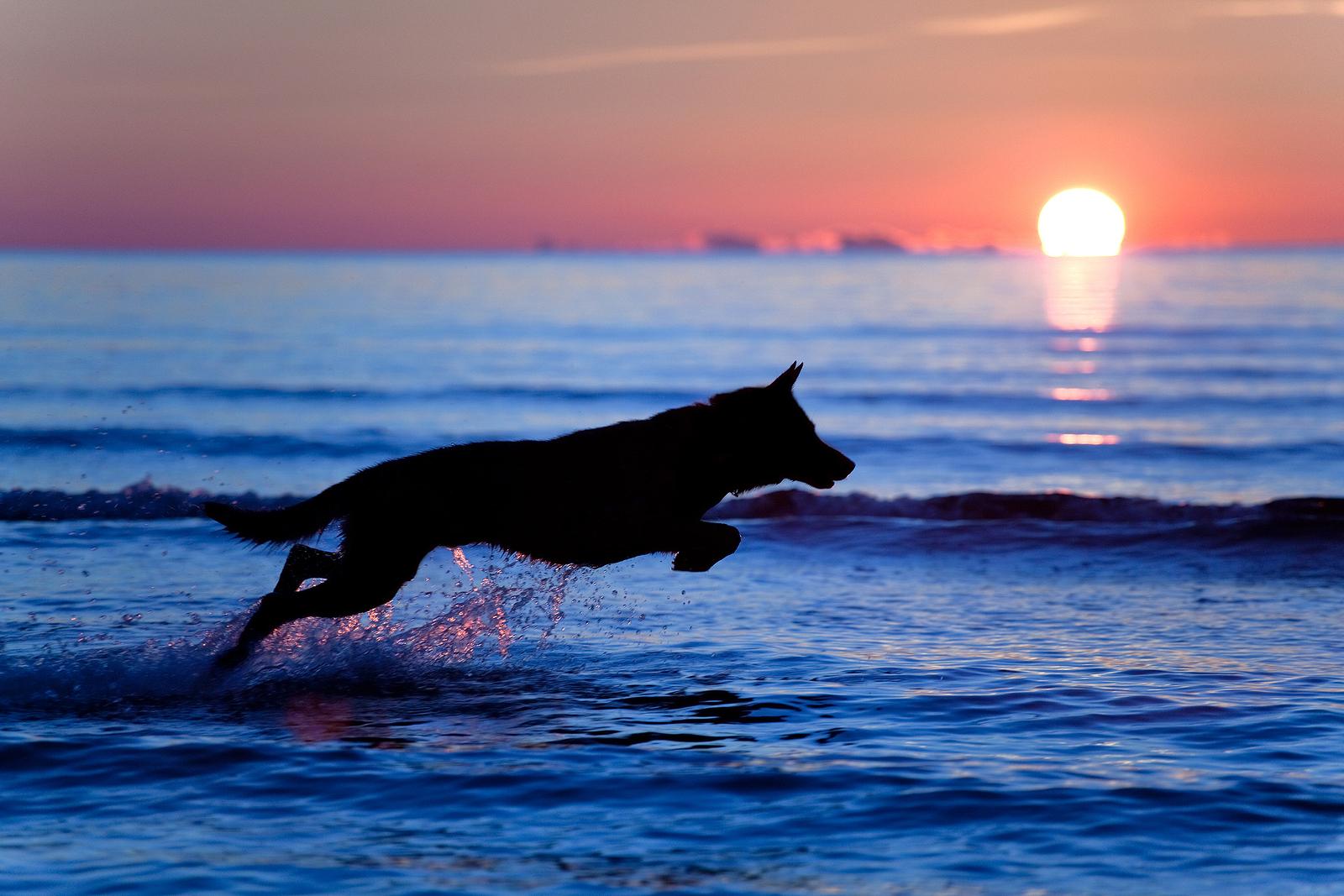 bigstock-Silhouette-Of-A-Dog-Running-On-10843775.jpg
