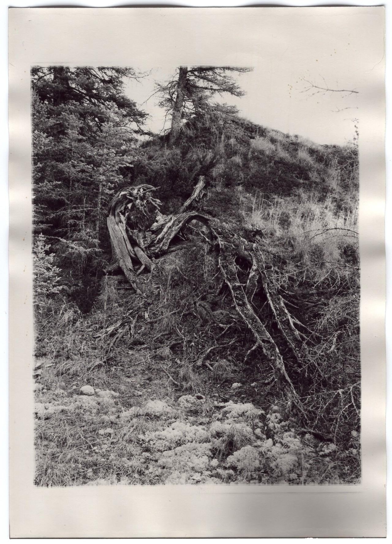 treesdown.jpg
